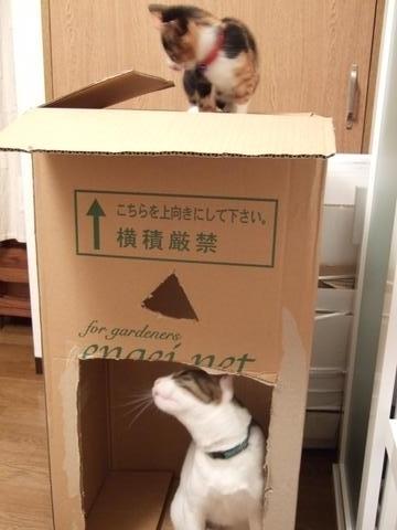 大好き箱2