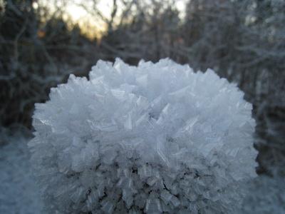 スウェーデンでの霜