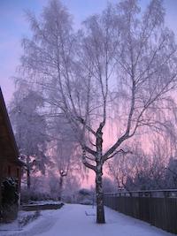 スウェーデンの樹氷
