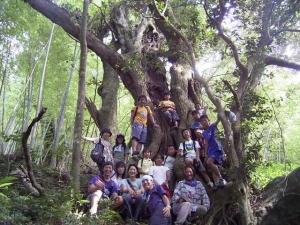 スダジイの巨木でパチリ!