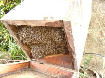ハチがたっくさん