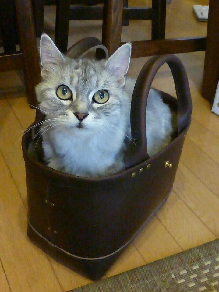 猫と焦げ茶の革トートバッグ