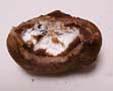 モチクリ-クリームショコラ