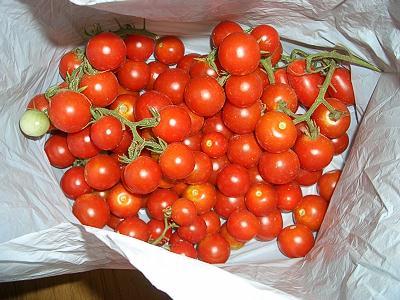 トマト祭り