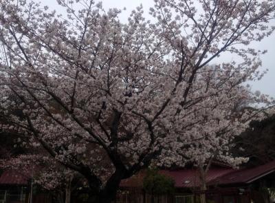 ピッコロの春