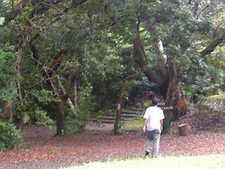 奄美自然観察の森1