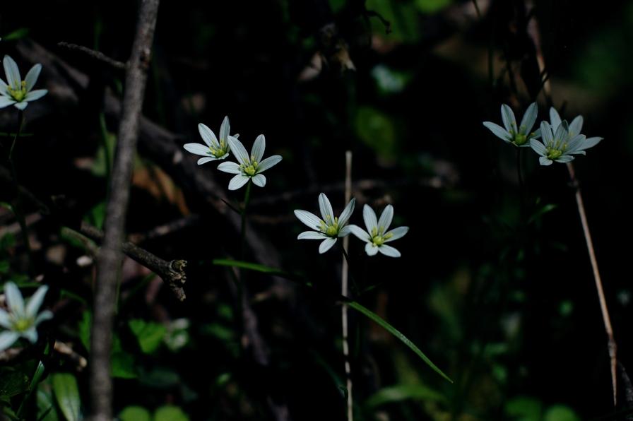 寒戸の草花1