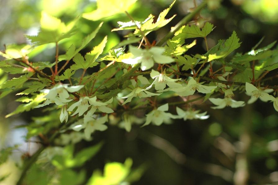 寒戸の草花4