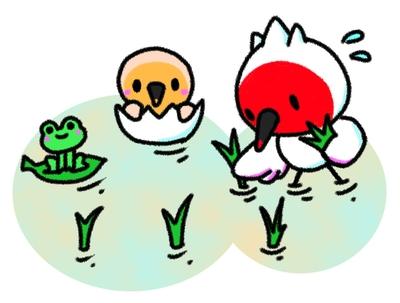田植えするトキ