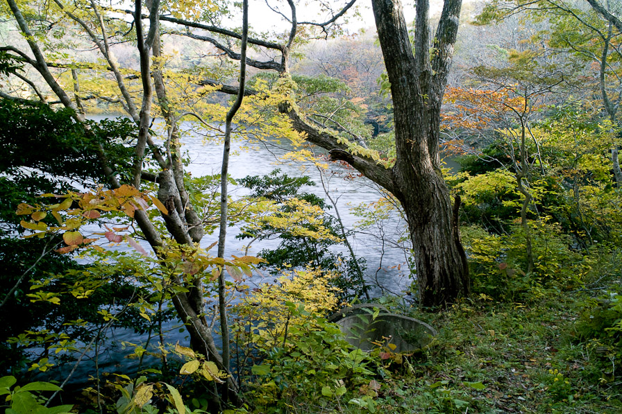 山居の池3