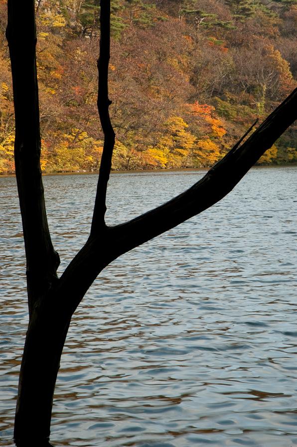 山居の池4