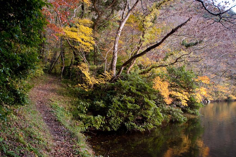 山居の池7