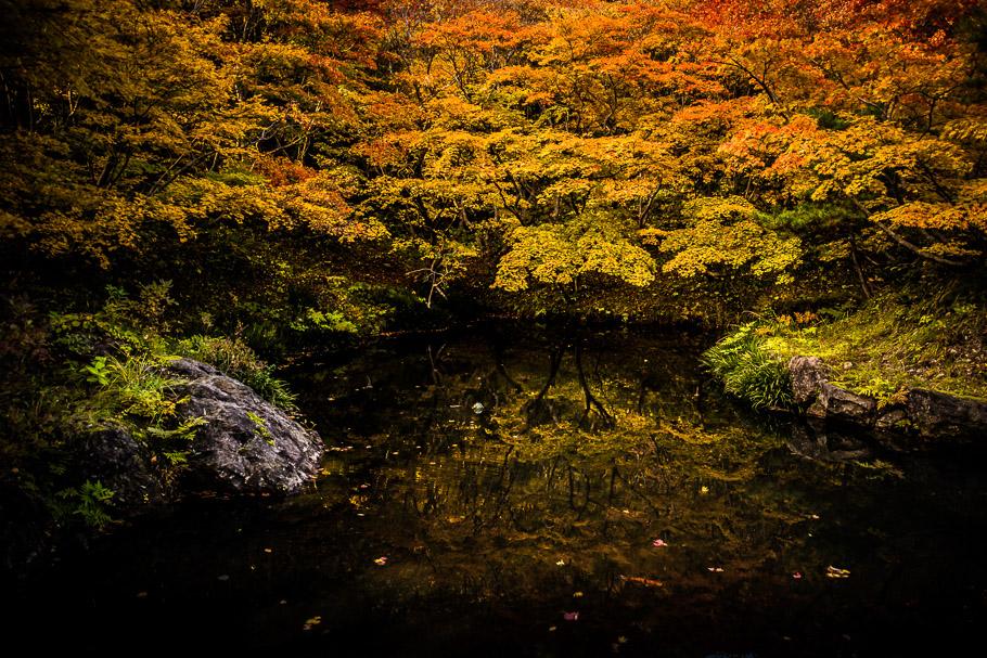 11_DSC7247(紅葉山公園).jpg