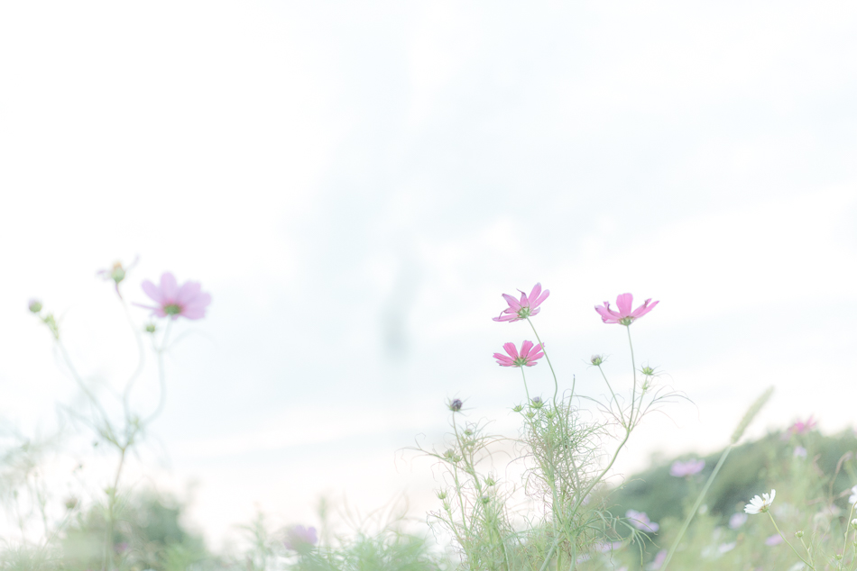 _DSC8870.jpg