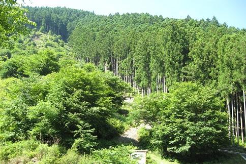広葉樹の植栽地
