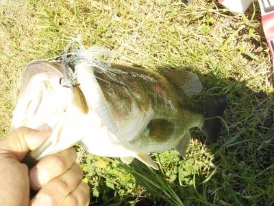 2012.10.18 bass1