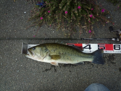 2012,11.2 bass 1
