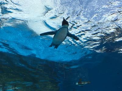 空飛ぶペンギン2