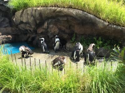 陸のペンギン