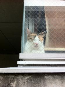 窓辺のおんな