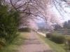 2013.04.05Kyoto02