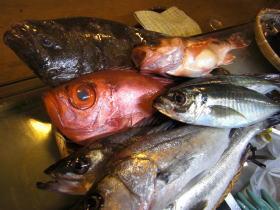 境港の魚介