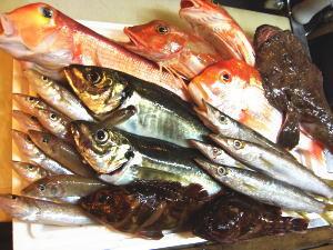 紀州のお魚