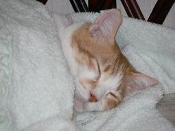 sleepingcoco.jpg