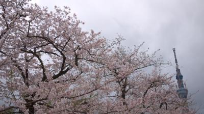 桜とスカイツリー