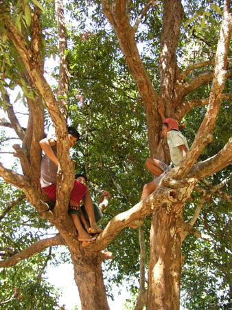 木に登って遊ぶ子供たち