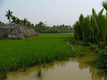 水田と薬草園とニッパヤシマングローブ林