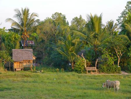 Myaungmya Guest house周辺ののどかな風景