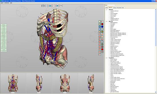 【3DCG】 3D人体模型『AnatomyLab』と『BoneLab』