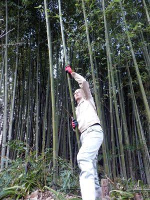 竹林で伐採作業