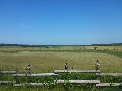 牧草畑を望む