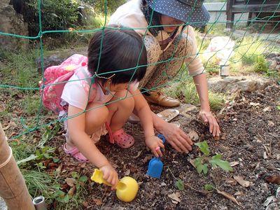 エコカーテン苗の植え付け