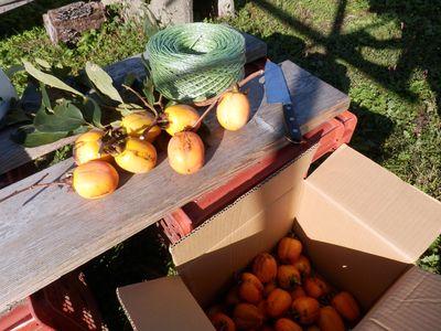 干し柿作り!