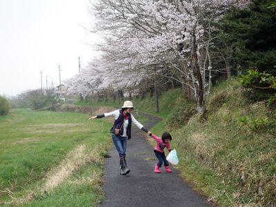 田舎の桜並木