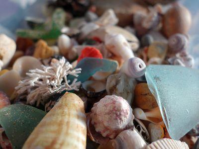 和歌山の貝殻とシーグラス