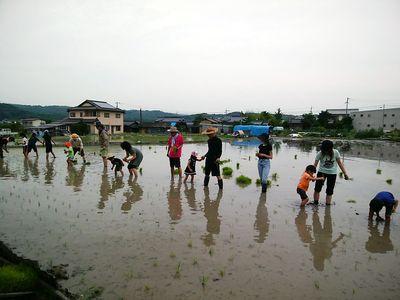 笠岡とくら田植え体験