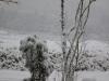 11月の雪 木島平