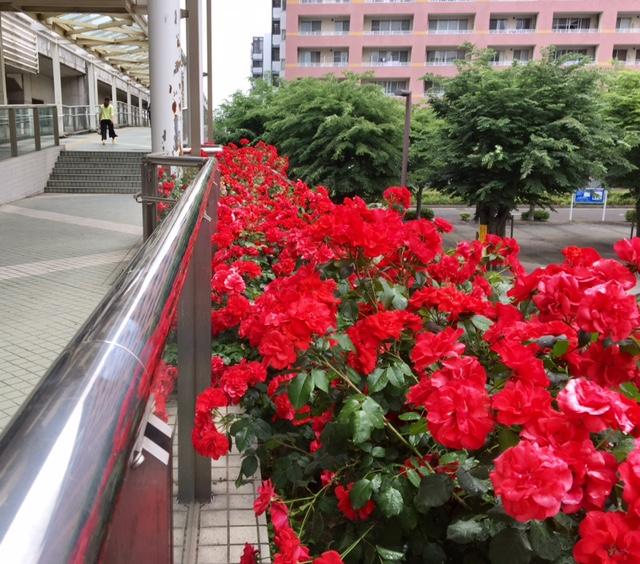 2D京成八千代通り