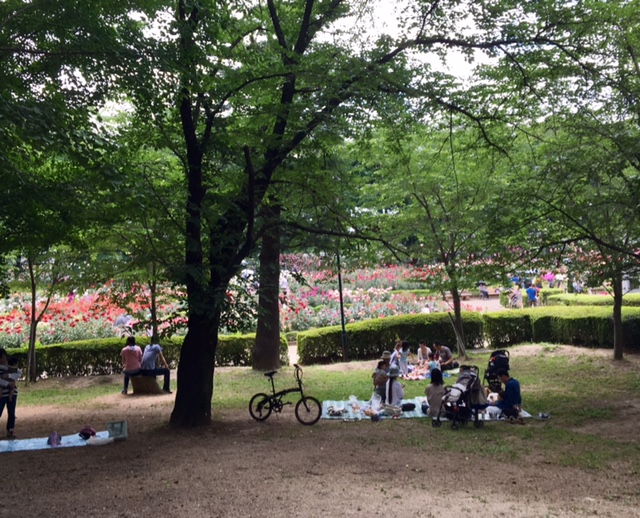 3F与野公園からバラ園