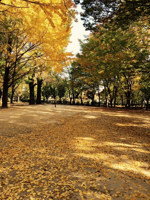 与野秋バラ02
