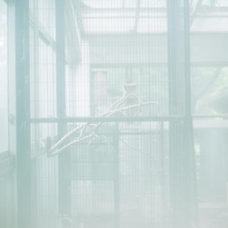20130531_井の頭動物園_i07.jpg