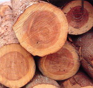 木質バイオマス②