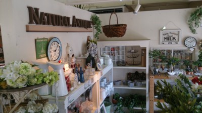 『Natural Antique』