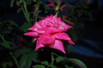 楽庭 花1
