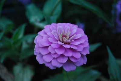 楽庭 花2