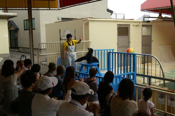 加茂水族館のアシカショー